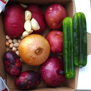 初夏野菜祭り(野菜)