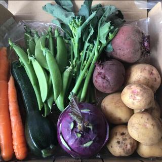 野菜 詰め合わせ コンパクトボックス(野菜)