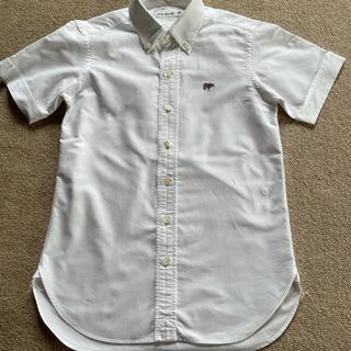 サイ(Scye)のSCYEボタンダウンシャツ(シャツ/ブラウス(半袖/袖なし))