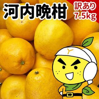 愛媛県産 宇和ゴールド 訳あり 7.5kg(フルーツ)