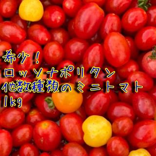 【希少】極甘ミニトマト詰め合わせ1kg コンパクト便(野菜)