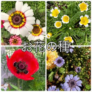 花の種 4種セット(その他)