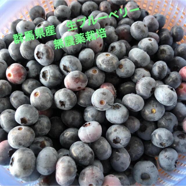 朝採り 群馬県産 生ブルーベリー 600グラム 食品/飲料/酒の食品(野菜)の商品写真