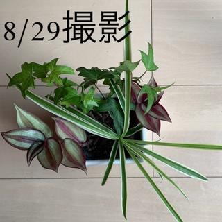 観葉植物 寄せ植え(その他)