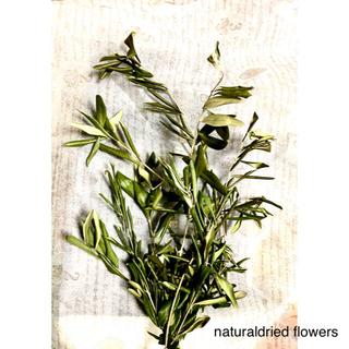 ナチュラルドライフラワー 初夏のガーデン オリーブの枝①(ドライフラワー)