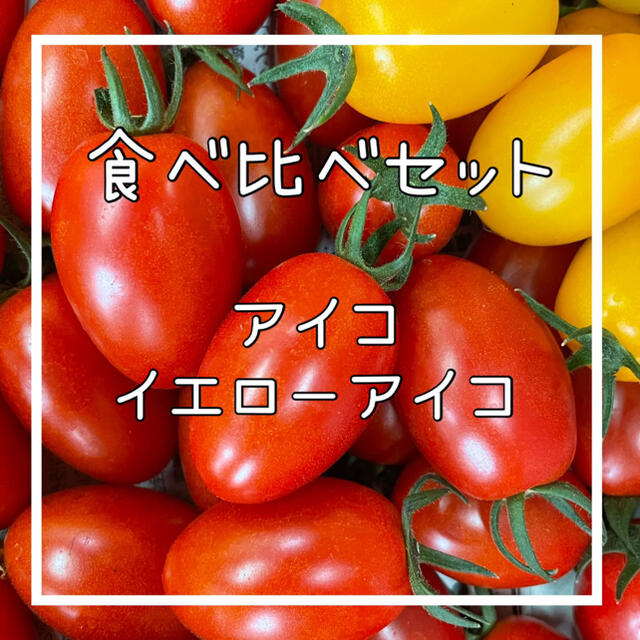 食べ比べセット‼️ミニトマトアイコ‼️ 食品/飲料/酒の食品(野菜)の商品写真