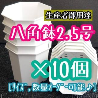 八角鉢 (白) 2.5号 ◎10個◎ 2.5寸 シャトル鉢 ホワイト(その他)