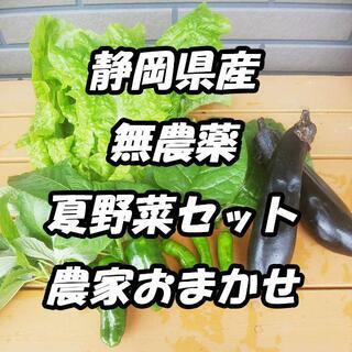 送料無料*静岡県産*無農薬*夏野菜*色々詰め合わせセット*農家直送*産直*(野菜)