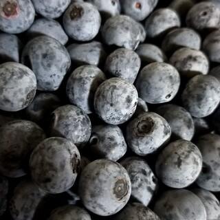 広島県産   無農薬  生ブルーベリー600g(フルーツ)