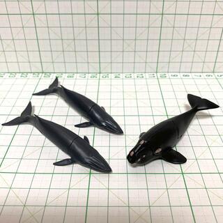 フルタセイカ(フルタ製菓)のチョコエッグ ニタリクジラ セミクジラ フィギュア(その他)