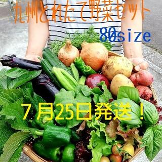 無農薬野菜詰め合わせ 7月25日発送!!(野菜)