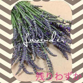 【約100本】ラベンダー Lavender ドライフラワー(ドライフラワー)