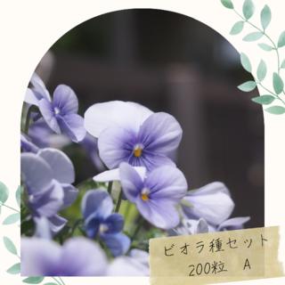 ビオラ 種 200粒  紫 白 パープル ホワイト ガーデニング 寄せ植え 園芸(その他)