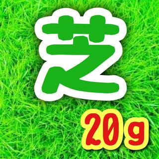 【暑さに強い高級品種】西洋芝☆育て方付 種 20g!(プランター)