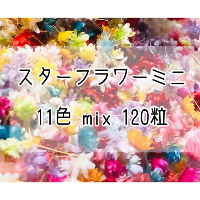 ★大人気★スターフラワーミニ11色mix120粒☆ドライフラワー箱入おまけ付き ハンドメイドのフラワー/ガーデン(ドライフラワー)の商品写真