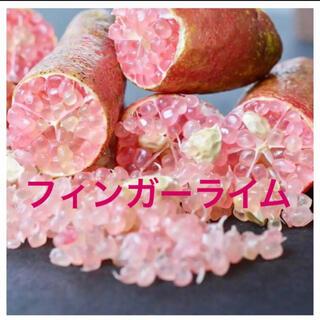 大人気! フィンガーライム ピンク 苗木 苗 ポットごと(フルーツ)