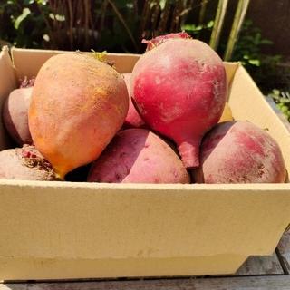 ビーツ9.0kgとビーツパウダー1袋・イエロービーツ入(農薬化学肥料不使用)(野菜)