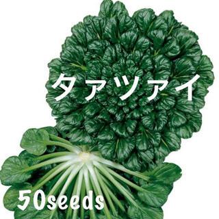 まき時! 中国 冬野菜 タァツァイ ドドーンっと! 種50粒!(野菜)