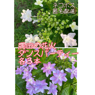 【ネコポス】隅田の花火、ダンスパーティー 各3本(その他)