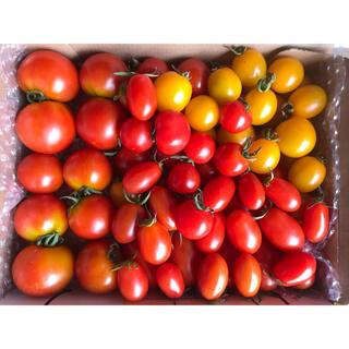 トマト 1.3kg アイコ&フルティカ&イエローミニ&レッドミニセットほぼ無農薬(野菜)