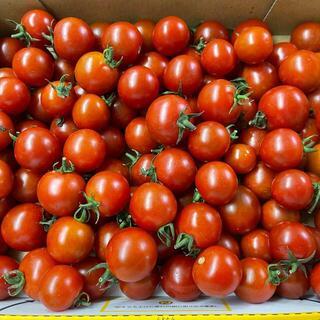 熊本県産 ミニトマト 1キロ 送料込 コンパクト便(野菜)