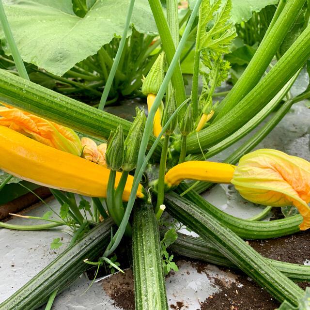 畑直送 無農薬野菜60サイズ 食品/飲料/酒の食品(野菜)の商品写真