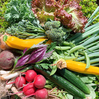 畑直送 無農薬野菜60サイズ(野菜)