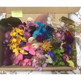 プリザーブドフラワー花材 ドライフラワー花材②(ドライフラワー)