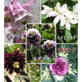 花種子 5品mix(その他)