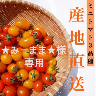 ミニトマト 3kg  【★みーまま★様専用】採れたて☘️産地直送いたします(野菜)