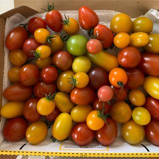 プチトマト1キロ (野菜)
