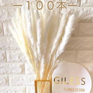 訳あり パンパスグラス テールリード ホワイト 白 花材 大量 ドライフラワー (ドライフラワー)