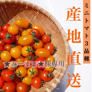 ミニトマト 3kg  [★みーまま★様専用] 採れたて☘️産地直送いたします(野菜)