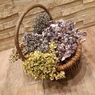 くしゅくしゅ紫陽花ドライフラワー 自然色 (ハイドランジア等) 5本(ドライフラワー)