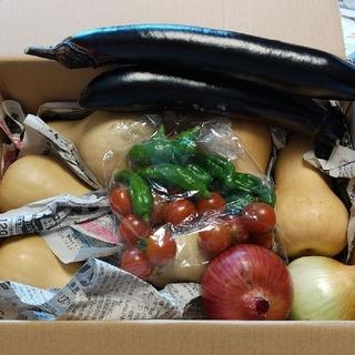 バターナッツかぼちゃと、野菜の詰め合わせセット5キロです。(野菜)