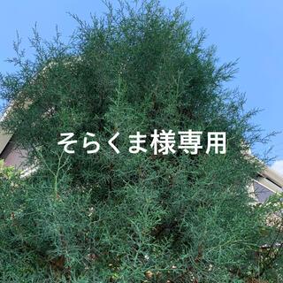 ⭐️コニファー・ブルーアイス ⭐️挿し穂・5本⭐️(その他)