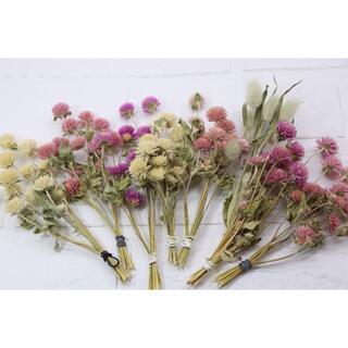 千日紅茎.葉付きピンク&白70本&ラグラス10本(ドライフラワー)