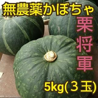 無農薬かぼちゃ『栗将軍』5kg 熊本県産(野菜)