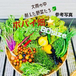 ポパイ畑☆お野菜お米お菓子詰め合わせ7/12(月)発送80sizeU^ェ^U(野菜)
