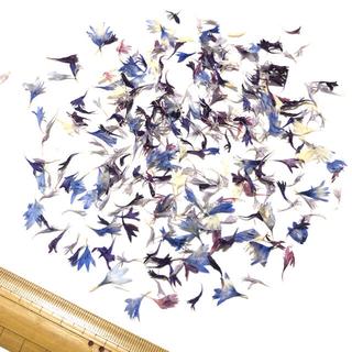 矢車草の花びら B級品 ミックス 花材 ドライフラワー レジン アクセサリー Y(ドライフラワー)