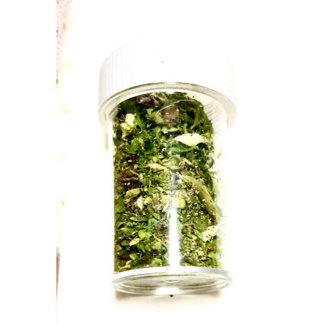 ナチュラルドライフラワー 可愛いグリーンリーフダスト詰め合わせ② ハンドメイドのフラワー/ガーデン(ドライフラワー)の商品写真