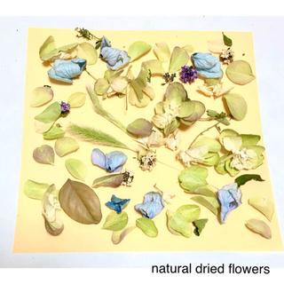 ナチュラルドライフラワー 可愛い花びらとリーフの詰め合わせ③(ドライフラワー)