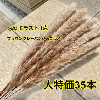 SALEブラウングレーパンパスグラス35本(ドライフラワー)