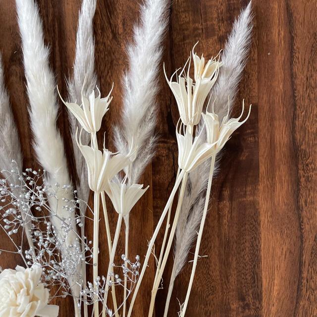 ドライフラワー  テールリード パンパス インテリア 雑貨  韓国 北欧 ハンドメイドのフラワー/ガーデン(ドライフラワー)の商品写真