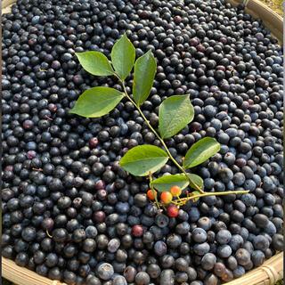 初物自然農法 無農薬 手摘みブルーベリー 700g (フルーツ)