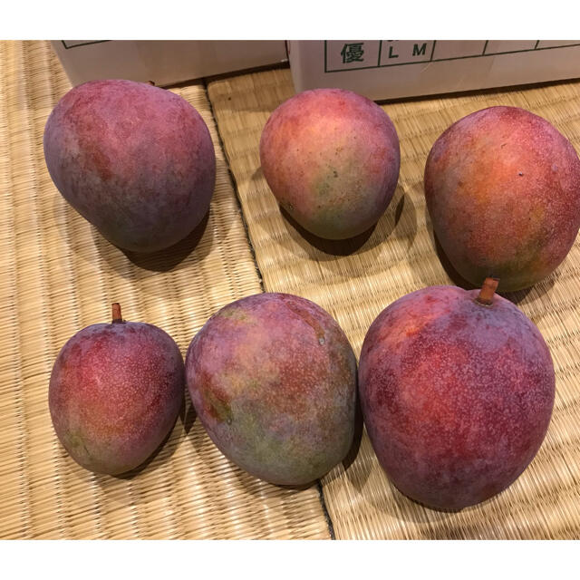 レッドキーツマンゴー  1キロ 食品/飲料/酒の食品(フルーツ)の商品写真