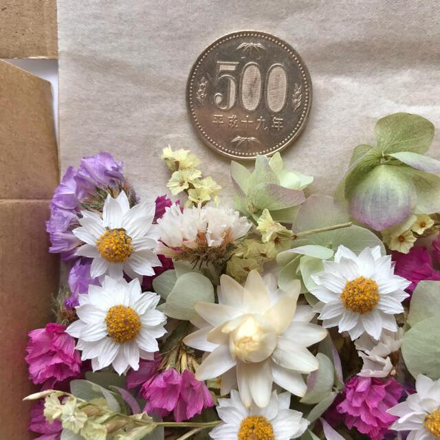 (14)ミニリース土台付き!貝細工 スターチス  ペーパーカスケード オレガノ ハンドメイドのフラワー/ガーデン(ドライフラワー)の商品写真