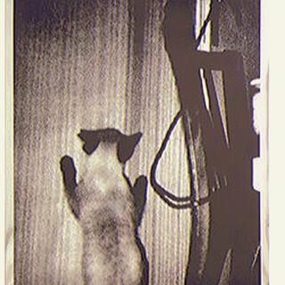 【極希少・署名入り】森山大道 サイン入りアートポスター Cat  GOLD(印刷物)