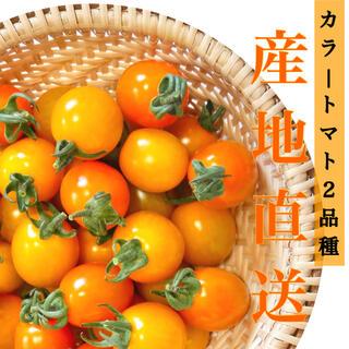 ミニトマト 2kg  [農学博士のDr.トマト] 採れたて☘️産地直送いたします(野菜)