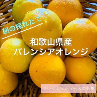 【送料無料】和歌山県産 減農薬★家庭用★希少国産バレンシアオレンジ (フルーツ)